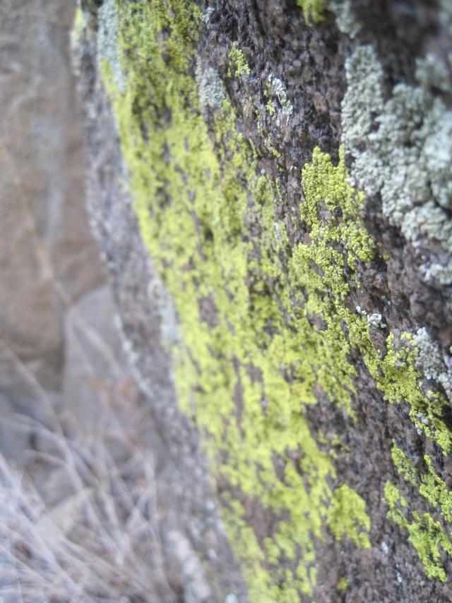 Climbing Photos 175